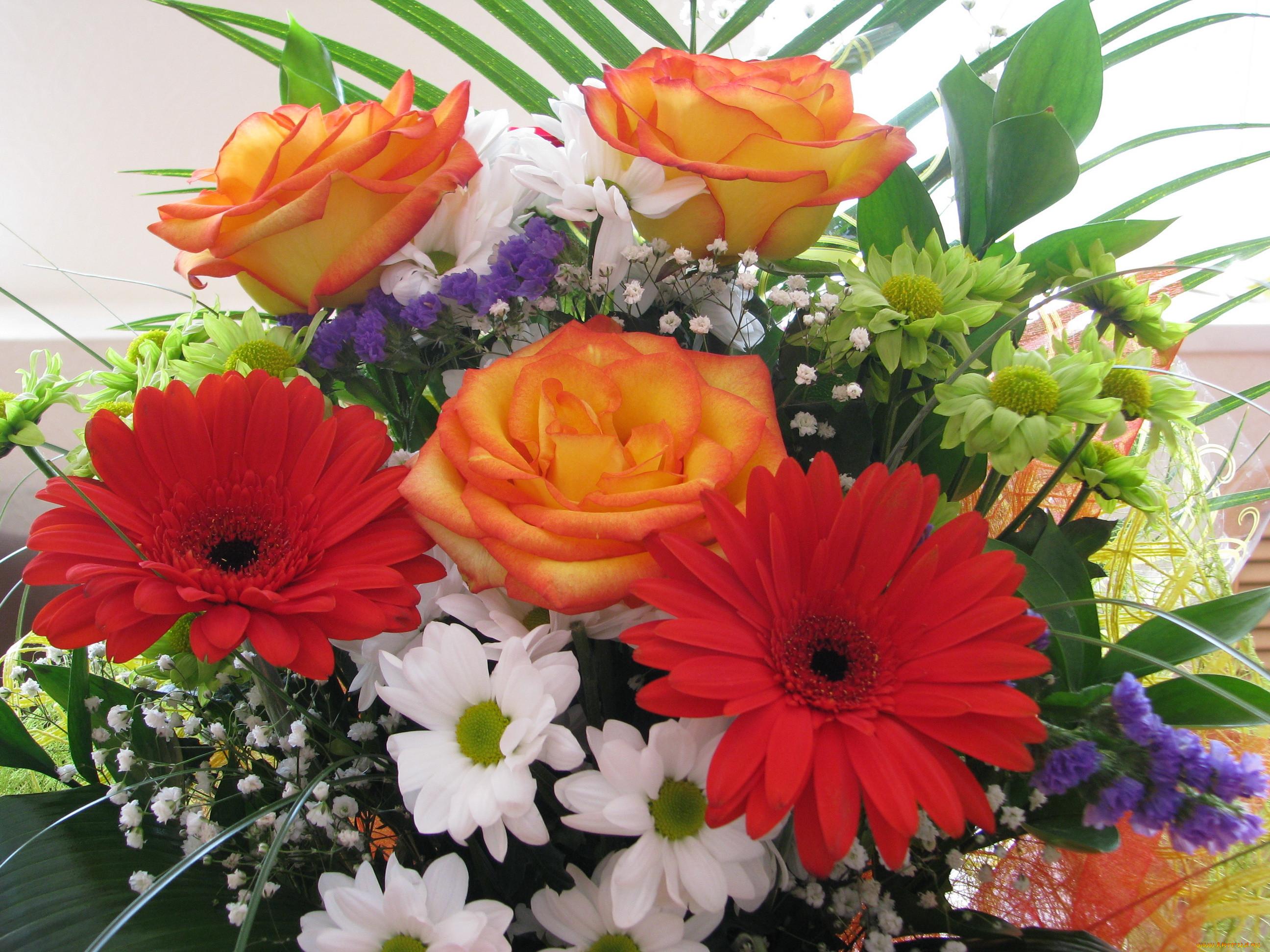 паттайе фото цветы герберы с днем рождения вилку, ибо